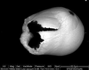 particella-di-ferro-parzialmente-esplosa